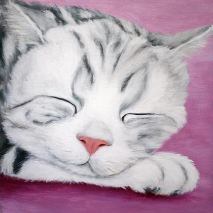 Grey Cat 灰猫
