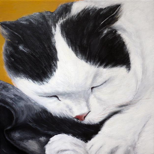 Black & White Cat 黑白猫