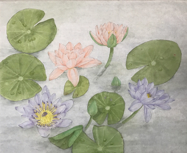 Water Lilies 蓮池