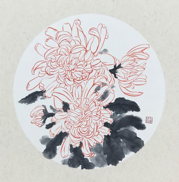 Red Chrysanthemum 紅菊花