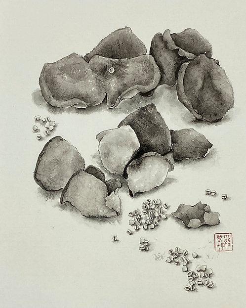 Dried Tangerine Peel and Barley 陳皮薏米