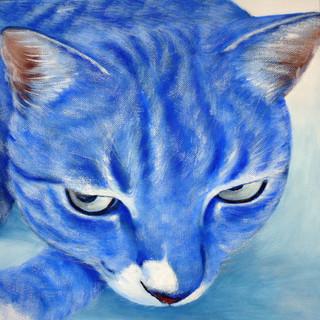 Blue Cat 藍猫
