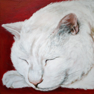 White Cat 白猫