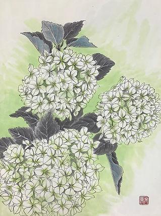 White Hydrangea 1.jpg