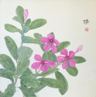 Vinca Roses 迎春花
