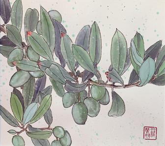 Peaceful Olive