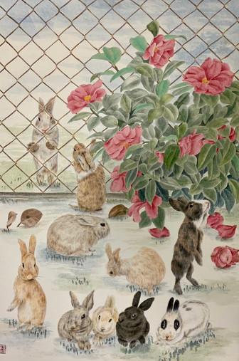 Angle Rabbits 天闕拾美圖