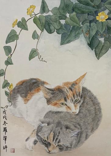 Two Cats 貓貓 - FeiFei  & LumLum