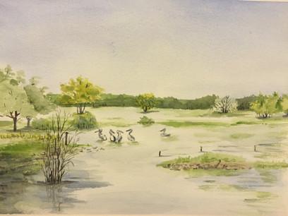 Wet Land, Australia