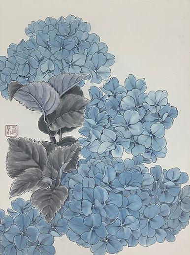 Bluey Hydrangea1.jpg