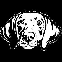 Weimaraner Rescue Dogs