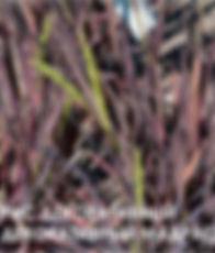 Рис посевной декор МАДРАС.jpg