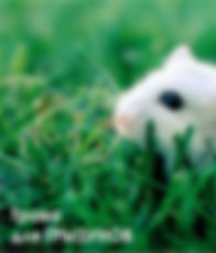 Трава для грызунов.jpg