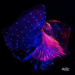 Artistes de lumières