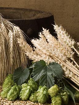 Удобрения для выращивания ячменя пивоваренного