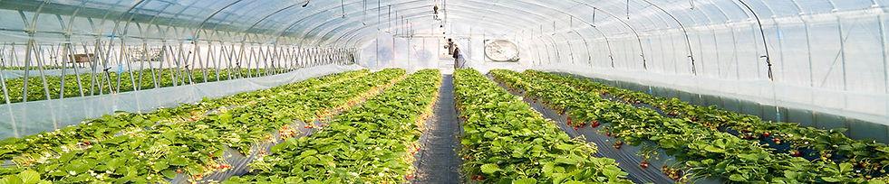 Удобрения для тепличных хозяйств