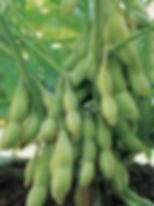 Удобрения для промышленного выращивания сои