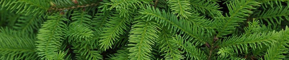 Удобрения для хвойных растений