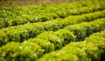 salad-722428__340.webp