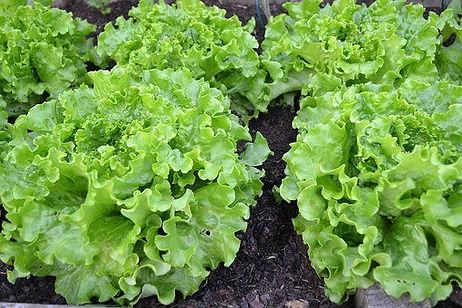 green-salad-1533956__340.jpg