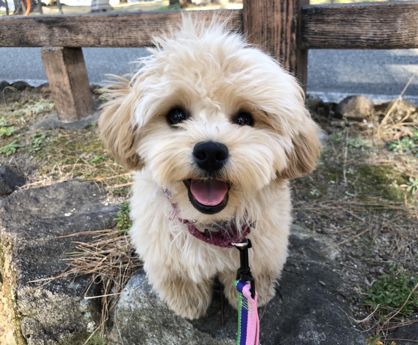 西宮|犬の幼稚園アットホーム|ニテコ池