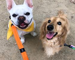 西宮|犬の幼稚園アットホーム|暑さ対策