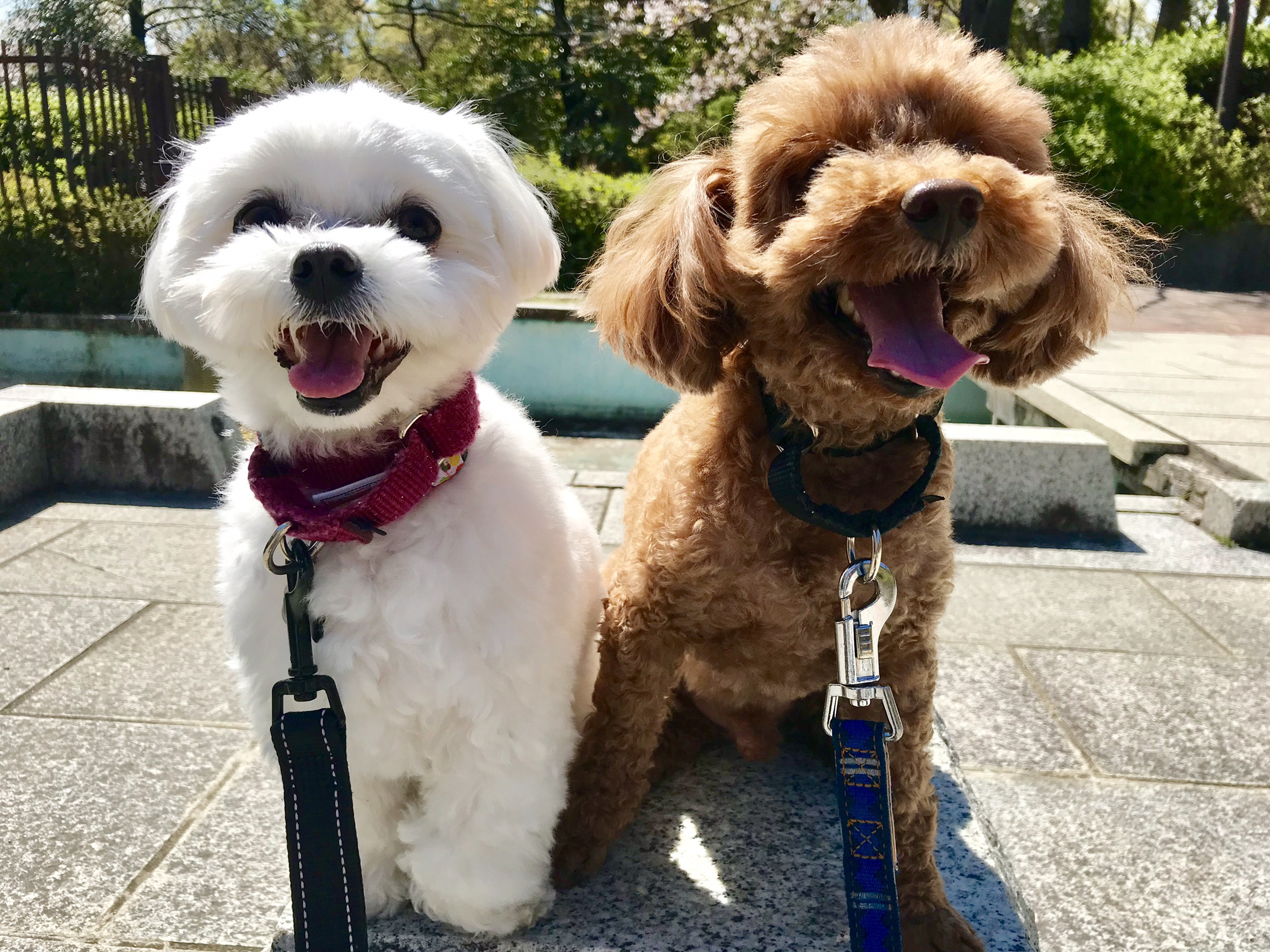 西宮|犬の幼稚園アットホーム|お散歩