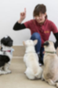 西宮|犬の幼稚園アットホーム|今村優子