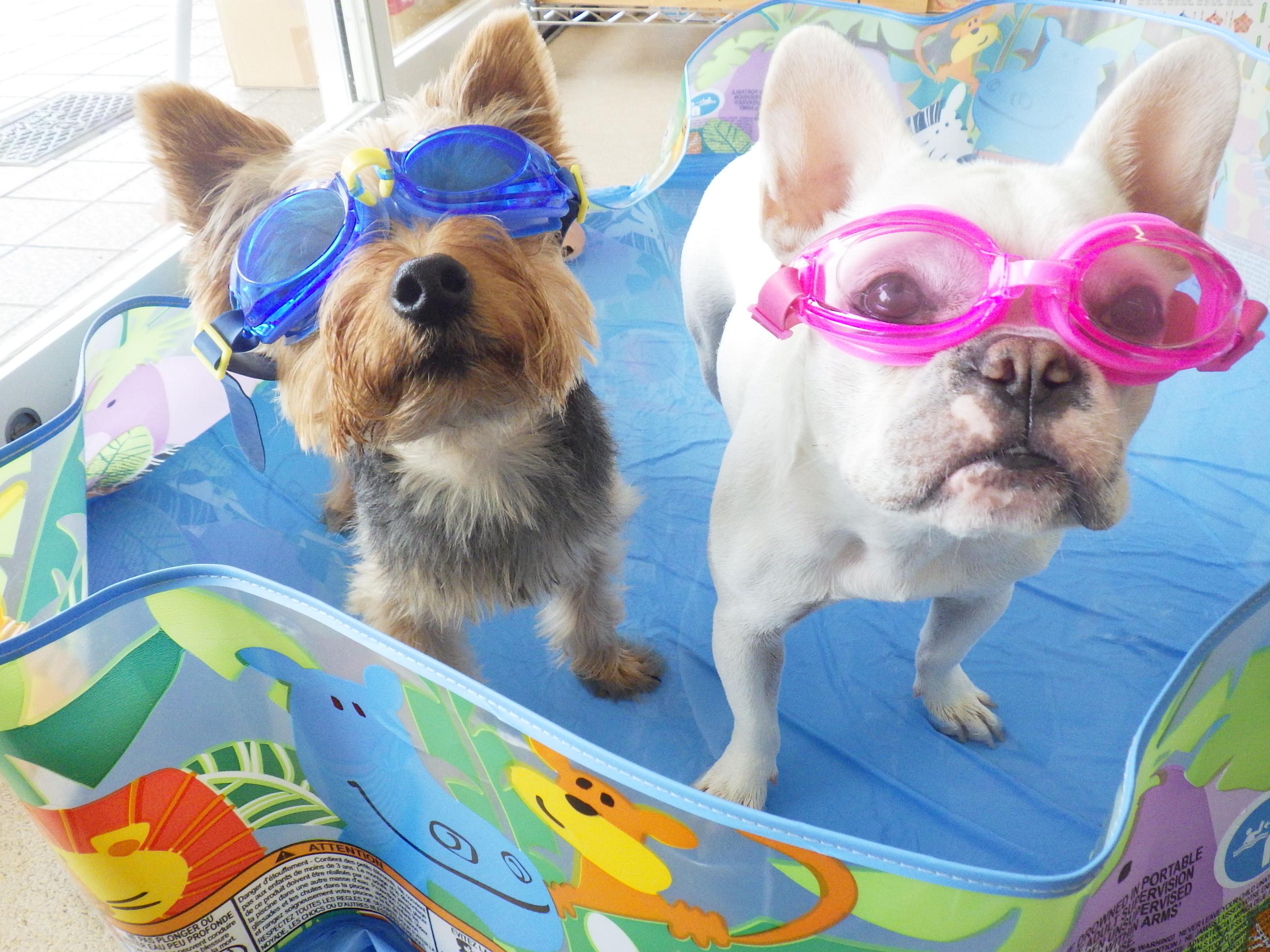 西宮|犬の幼稚園アットホーム|プール