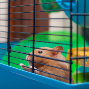 Hutch and cage cleaning tips for small furry pets