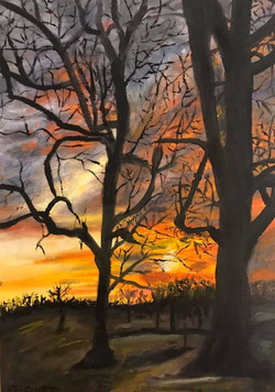 """""""Sunset Behind Trees"""""""