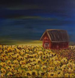 """""""Sunflower Field (evening)"""""""