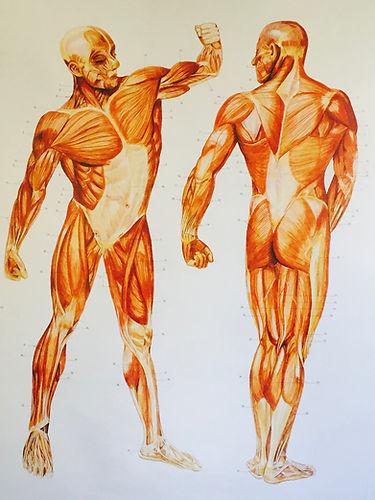 Sportmassage ontspanningsmassage praktiijk sprankel lichaam spieren