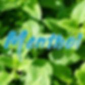 Menthol 2.jpg