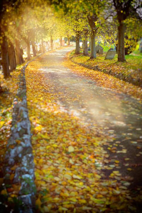 Pathy Leaves