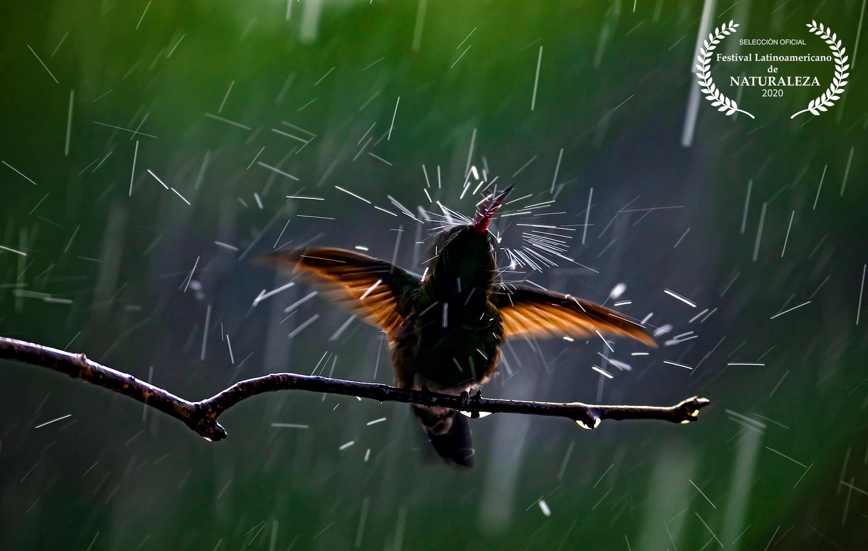 Rain Bath