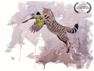 European Wild Cat catching Grey-headed Woodpecker