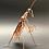 Thumbnail: Mottled Green Praying Mantis