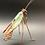 Thumbnail: Light Green Iridized Praying Mantis