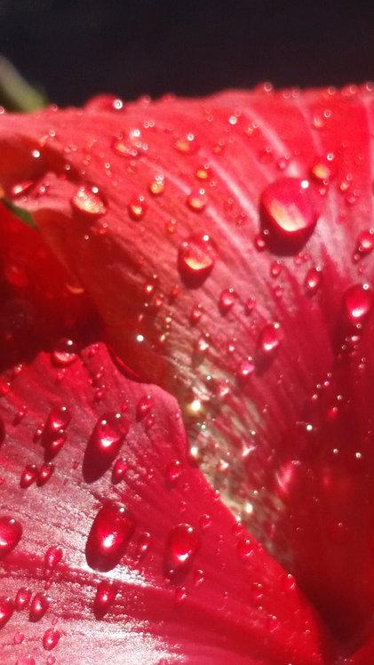 LIQUID RED