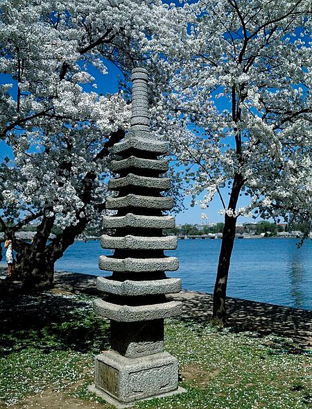 The Japanese Pagoda nestled among blooming cherry blossom trees along the Tidal Basin
