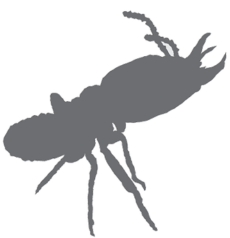 termite-grey-anntten.png