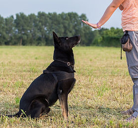 Dog-Training-Collar-Cover.jpg
