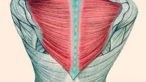 El cuello/El escalón