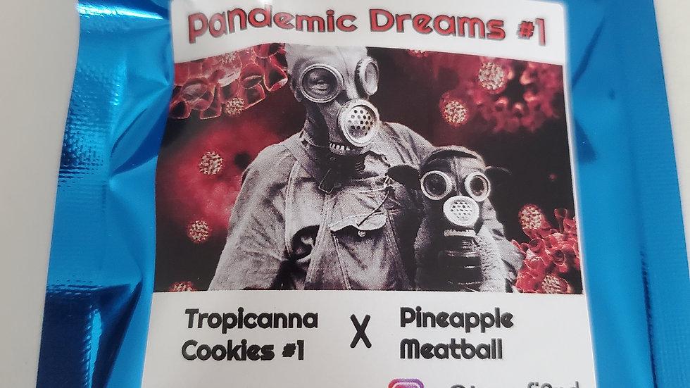 Terp fi3nd- Pandemic dreams #1 regs