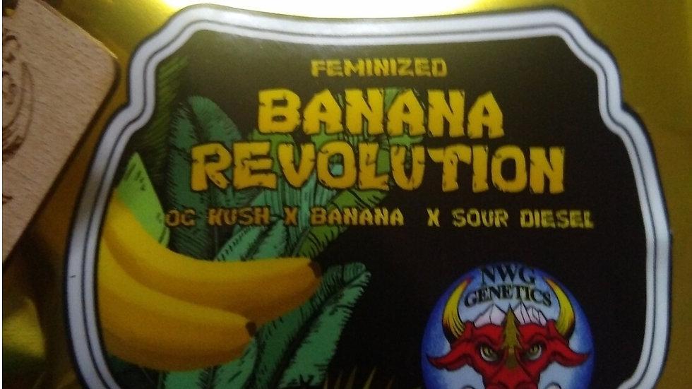 NWG Genetics- Banana Revolution Photo Fem 5 Pack