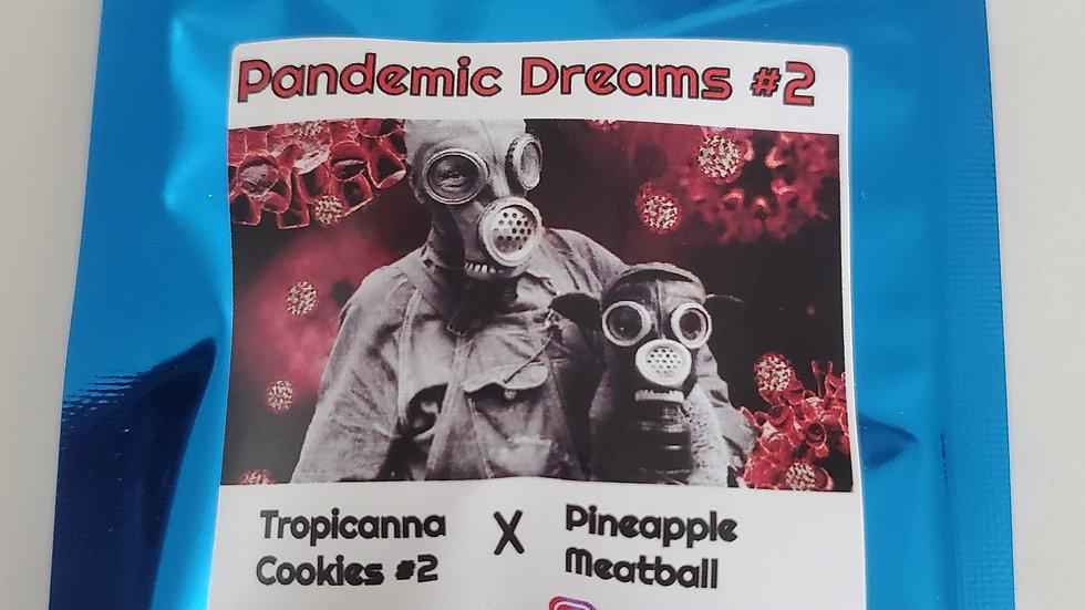 Terp fi3nd- Pandemic dreams #2 regs