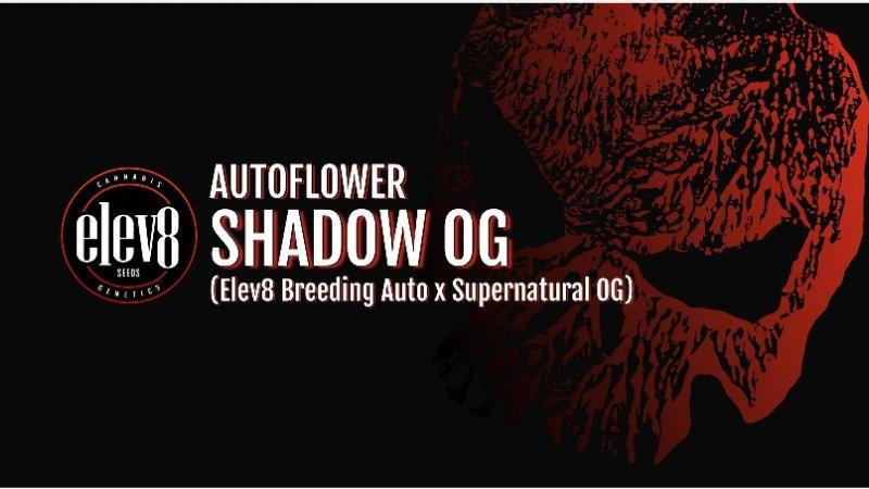 elev8 seeds- Shadow OG- Autoflowering