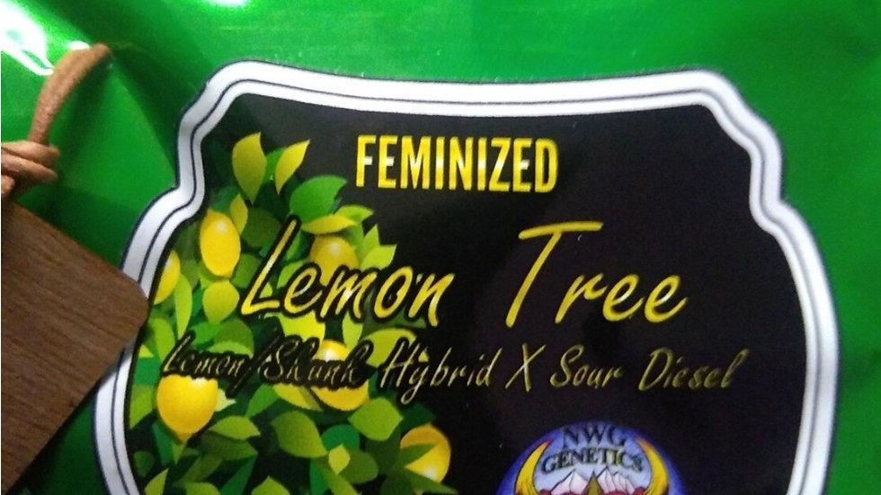 NWG Genetics- Lemon Tree Photo Fem 5 package