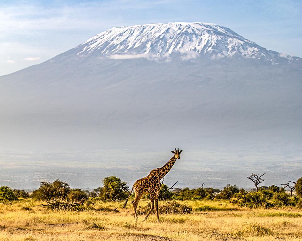 JackyeM-killie giraffe